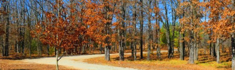 Front Drive, Autumn