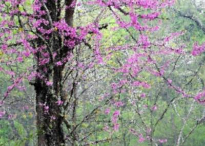 Spring has Sprung at Lake Fork