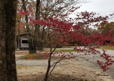 Dogwood Beautiful in Autumn