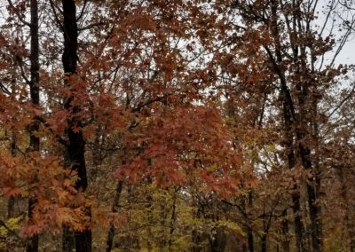 Take a Walk Among the Trees